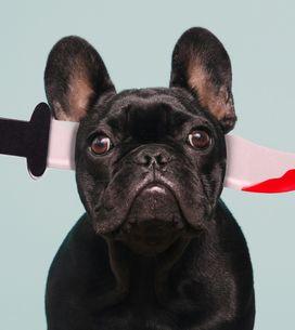 Carnaval para mascotas: ¡los disfraces más originales y divertidos!