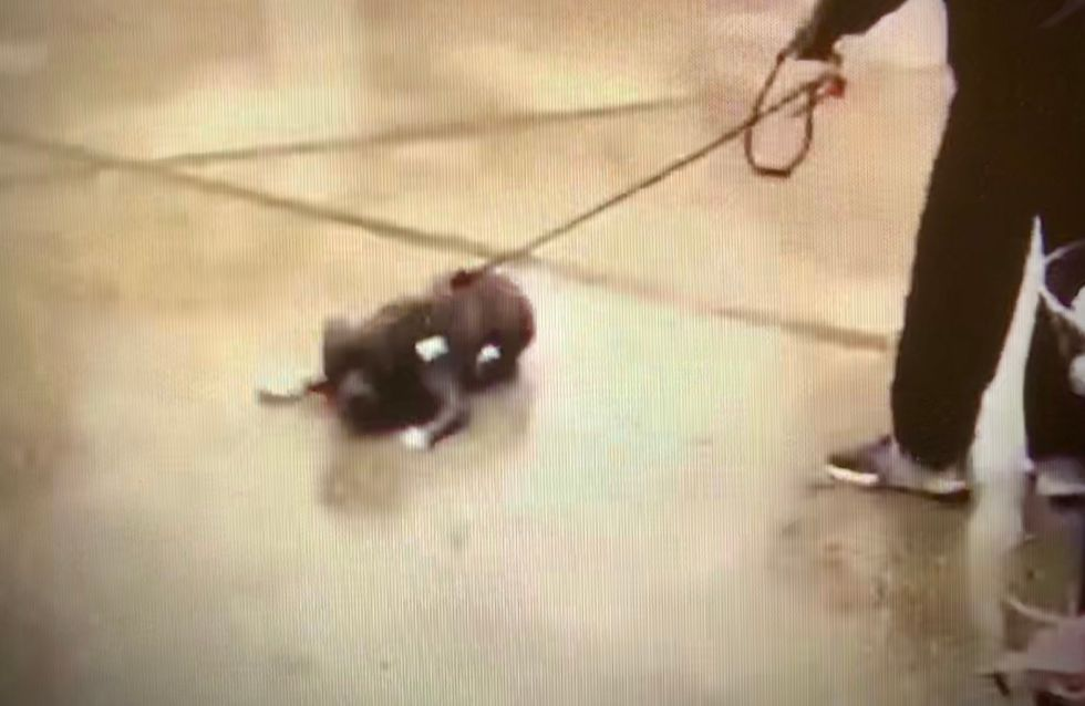 Grâce aux réseaux sociaux, un homme violent avec son chien interpellé dans les Yvelines