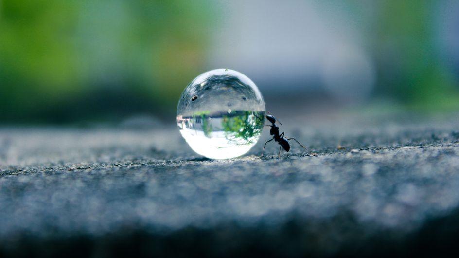 Sognare formiche: significati e interpretazioni