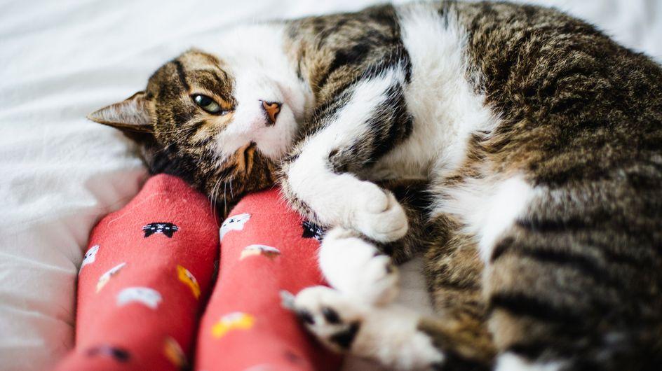 Tödlich: Mäuseköder aus dem Baumarkt gefährdet Katzen und Hunde