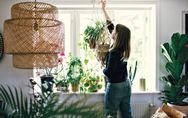 5 plantes retombantes à suspendre dans son salon