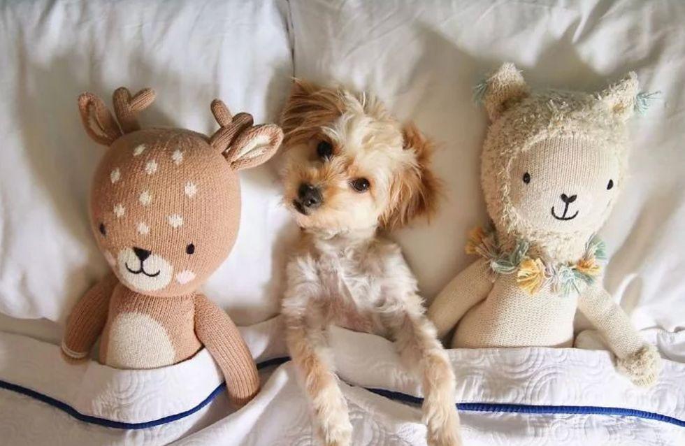 Cet hôtel accueille des chiens abandonnés et les propose à l'adoption aux clients
