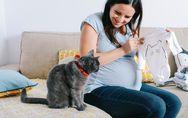 Toxoplasmosi in gravidanza: sintomi e cause dell'infezione e come prevenire i ri