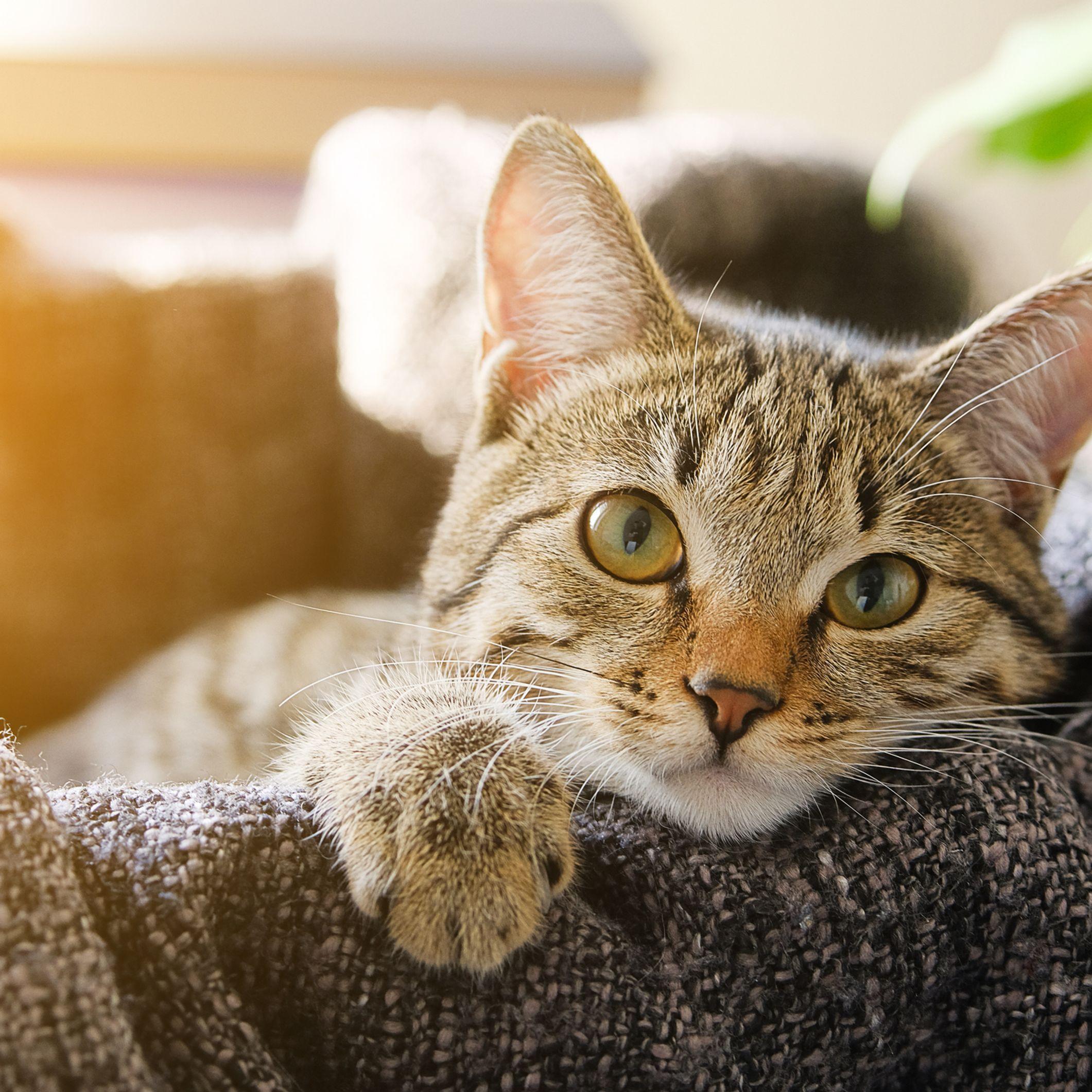 Sognare Gatti Significati E Interpretazioni