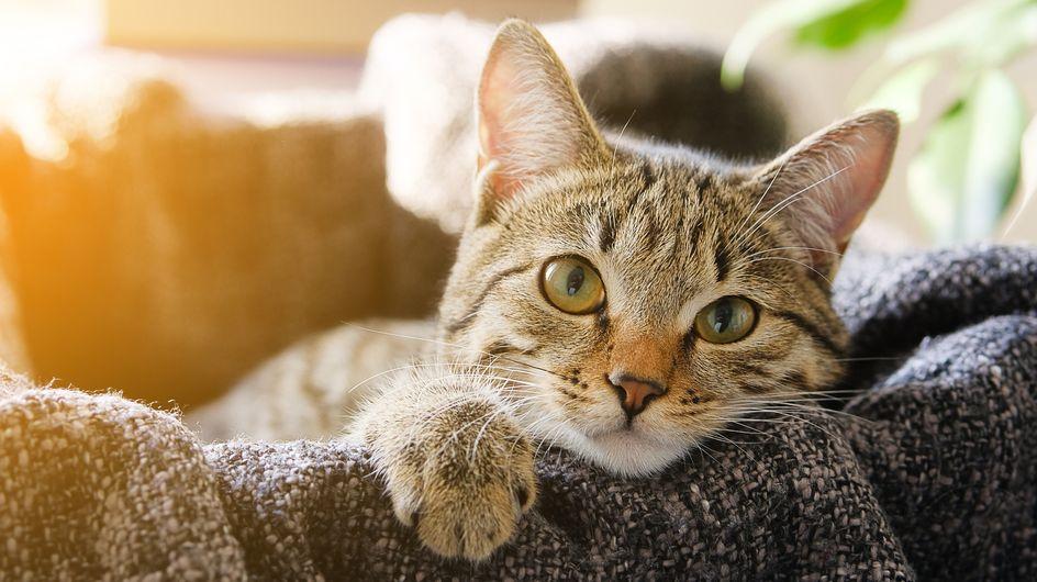 Sognare gatti: i significati e le possibili interpretazioni