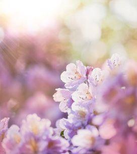 Frasi sulla primavera: le più belle frasi dedicate alla stagione dell'amore!