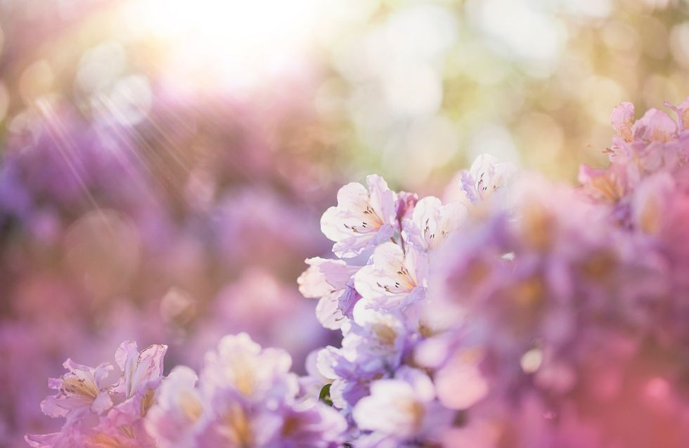 Le Piu Belle Frasi Sulla Primavera.Frasi Sulla Primavera Le Piu Belle Frasi Di Sempre