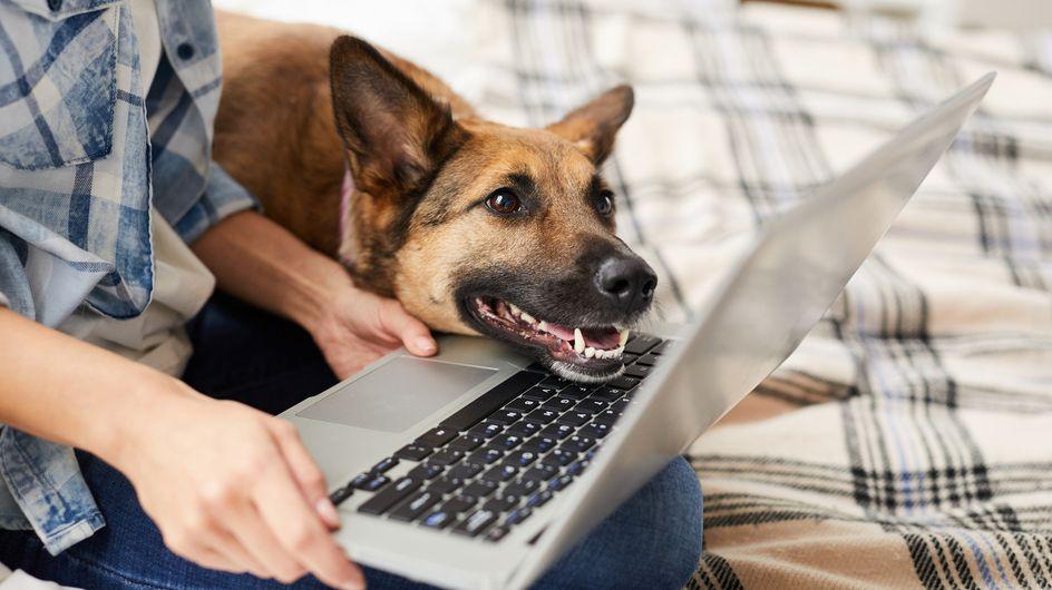 Coronavirus: 5 Tipps für Hundehalter