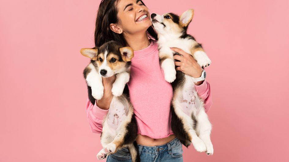 Coronavirus beim Hund: Übertragung und Maßnahmen