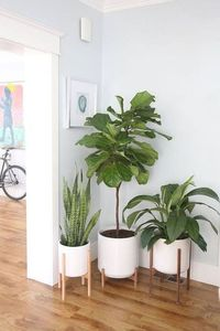 Decorar la entrada con plantas