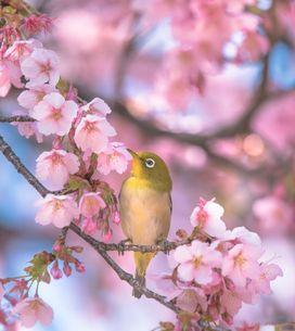 Poesie sulla primavera: 10 poesie per celebrare la stagione dei fiori