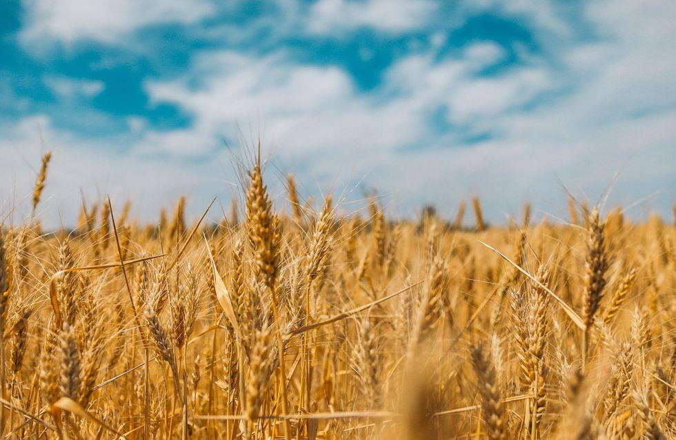 Quarantaine : et le monde agricole ?