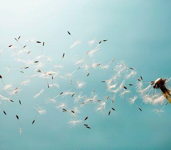 Segni d'aria: caratteristiche, pregi e difetti