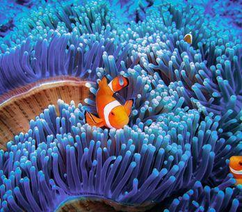 Sognare pesci: significati e interpretazioni