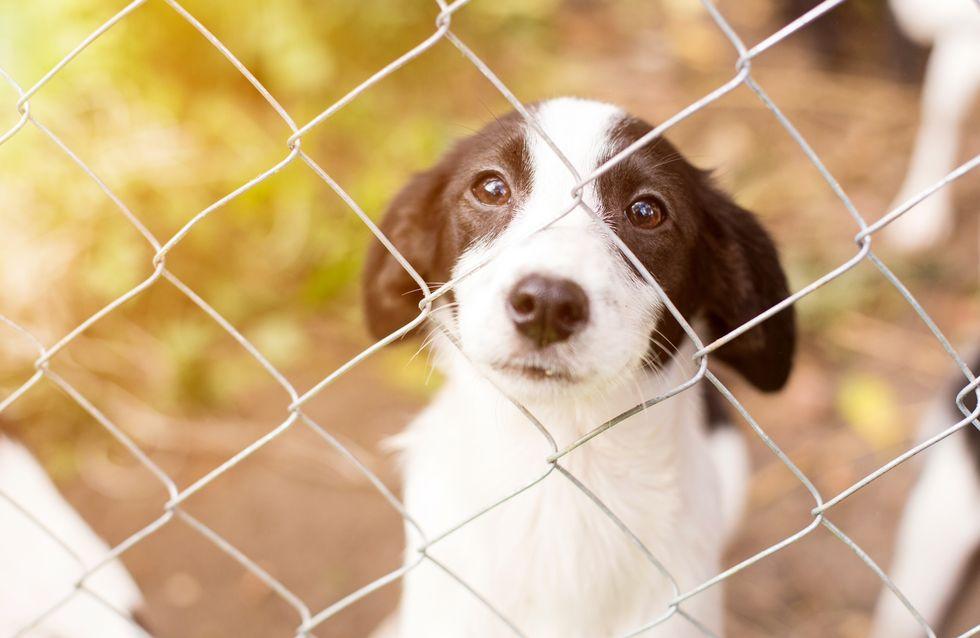 Covid-19 : 30 millions d'amis se mobilise pour venir en aide aux animaux abandonnés