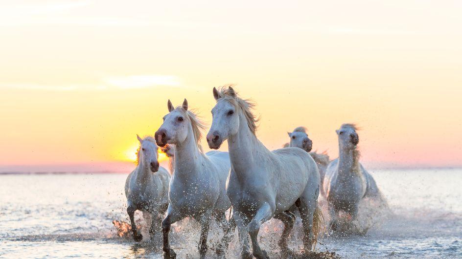 Sognare cavalli: significati e interpretazioni