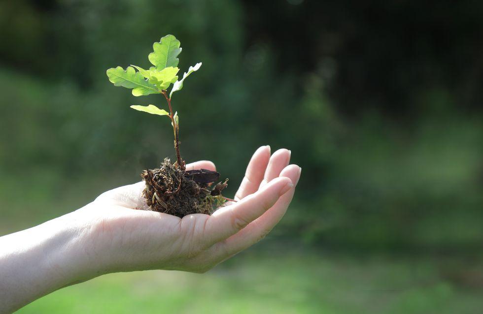L'écologie, un enjeu en danger dans la relance économique post-Covid