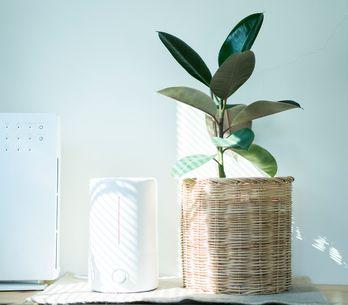 Estos son todos los beneficios de tener un humidificador en casa