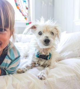 Mascotas para niños: ¿qué mascotas son adecuadas para ellos?