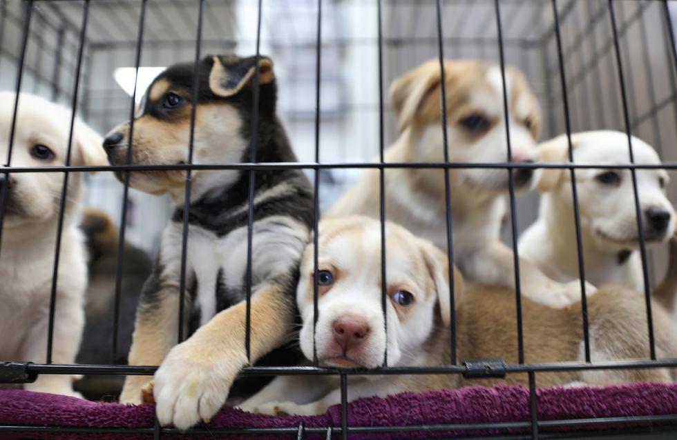 Les adoptions solidaires doivent être des adoptions responsables., insiste Jennifer, responsable d'un refuge SPA