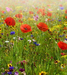 Sognare fiori: significati e interpretazioni