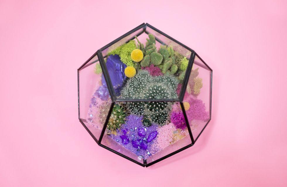 Pflanzen im Glas: Anleitung für ein ewiges Terrarium