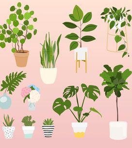 Comment éviter de tuer vos plantes pendant les vacances ?