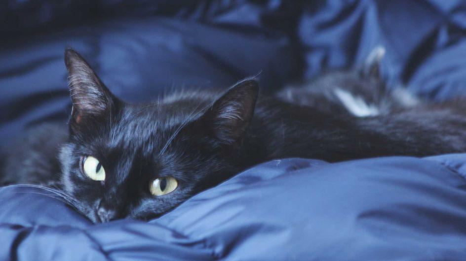 Bettdecke waschen: Die besten Tipps