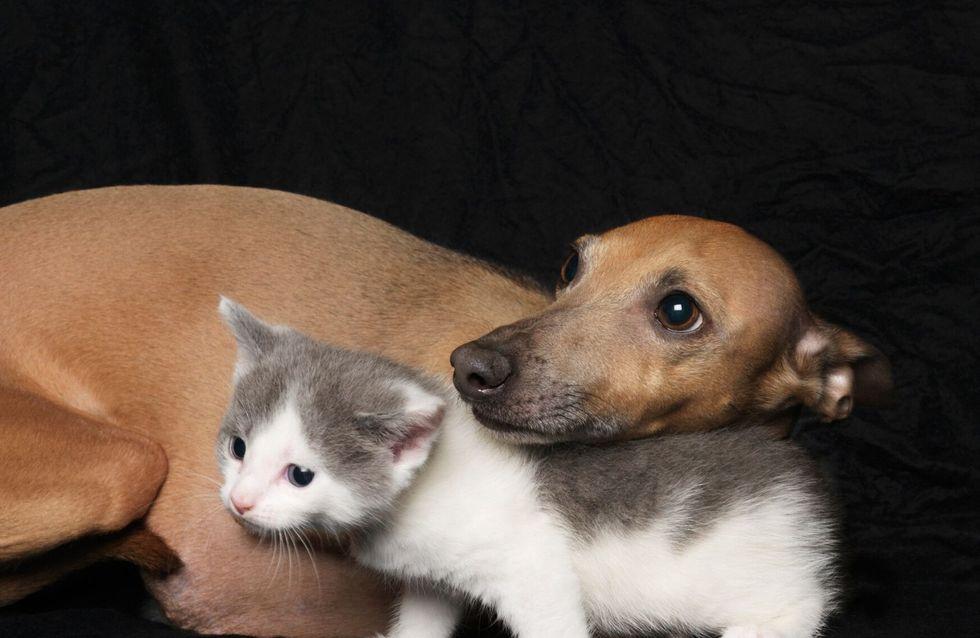 Des animaux de laboratoire vont être proposés à l'adoption