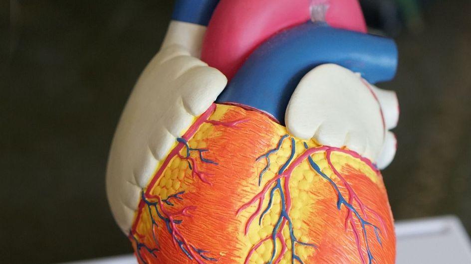Test sulla personalità: quale parte interna del corpo sei?