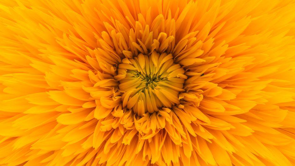 Colore giallo: significato e proprietà sulla mente