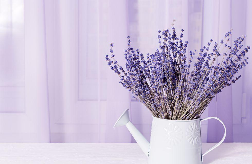 10 plantes ultra efficaces pour repousser les moustiques