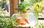 Wasserpflanzen im Glas: Anleitung für einen eigenen Wassergarten