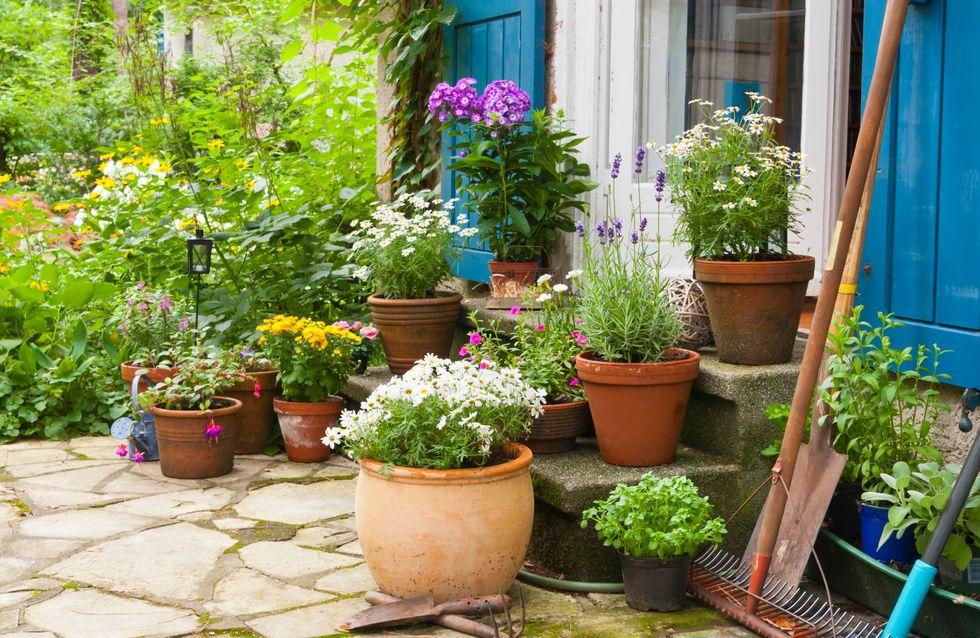 Pflanzen gegen Stechmücken: Die vertreiben Moskitos!