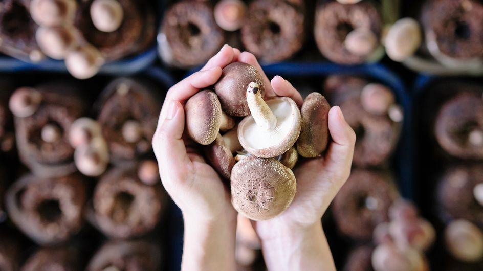 Funghi in gravidanza: si possono mangiare o meglio evitarli?