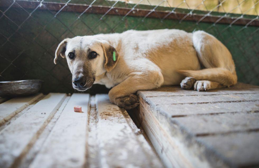 Torturer ou abandonner son animal est un peu plus puni par la justice