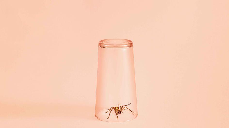 Mittel gegen Spinnen: 5 Maßnahmen, die helfen