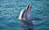 Sognare delfini: significato e interpretazioni