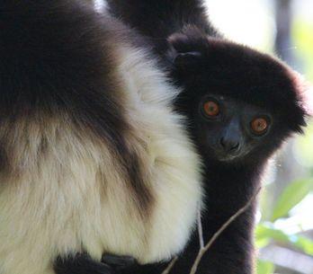 Quels sont les animaux menacés d'extinction cités dans une nouvelle liste rouge
