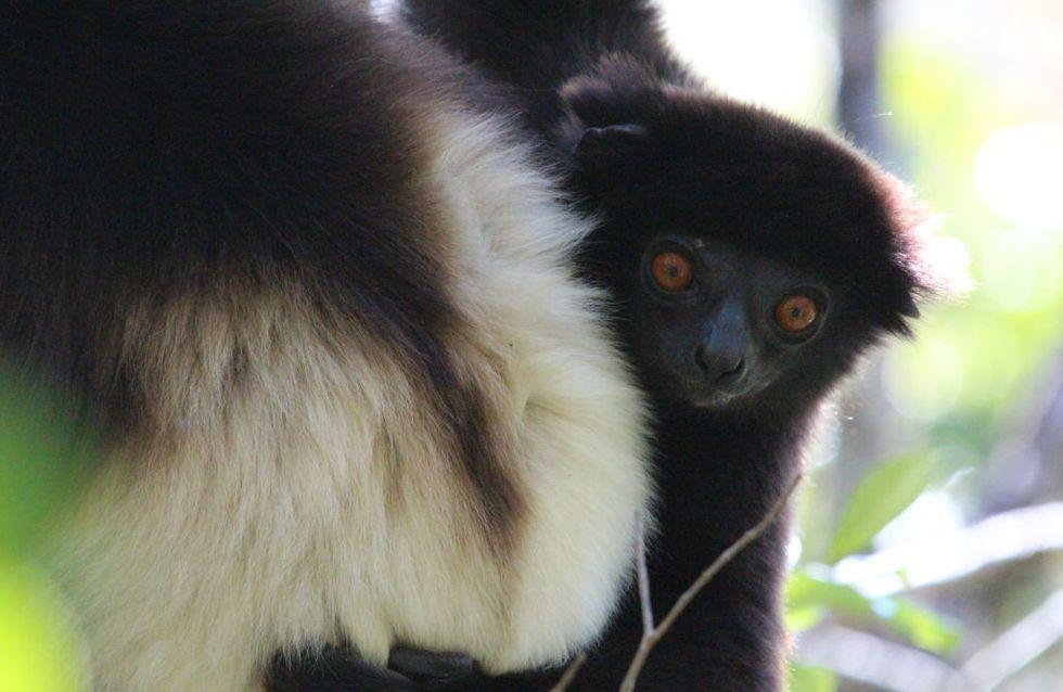 Quels sont les animaux menacés d'extinction cités dans une nouvelle liste rouge ?