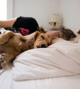 Flöhe im Bett: So erkennst & bekämpfst du sie