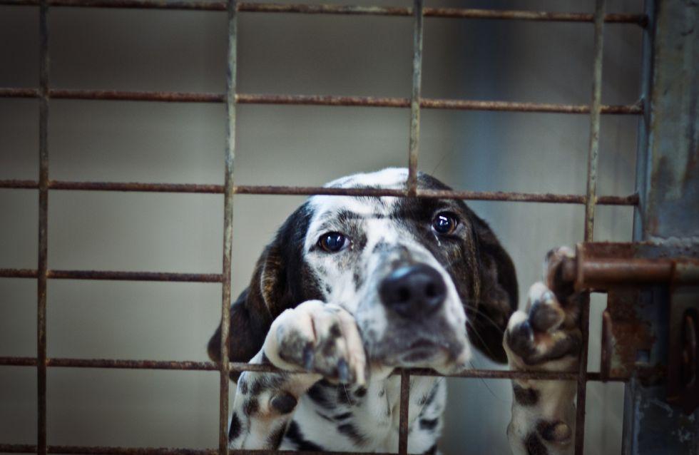 Soutenez-vous le projet de Référendum pour les droits des animaux ?