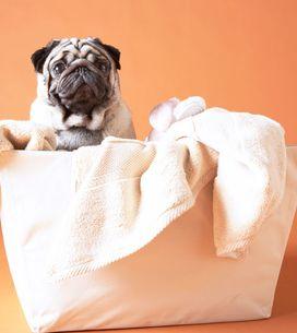 Wäsche sortieren: So trennt ihr eure Kleidung richtig