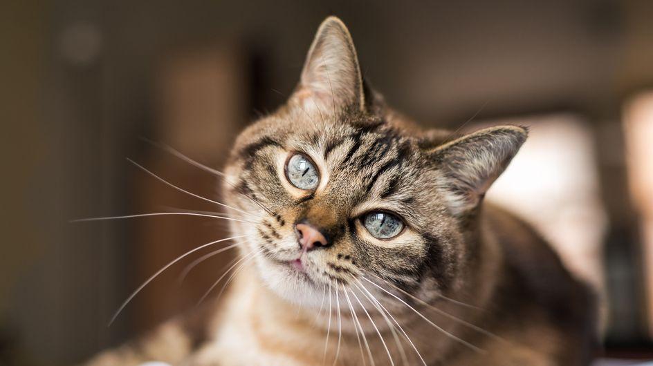 Frasi sui gatti: le citazioni più belle e divertenti