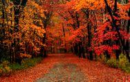Frasi sull'autunno: le citazioni più belle e suggestive