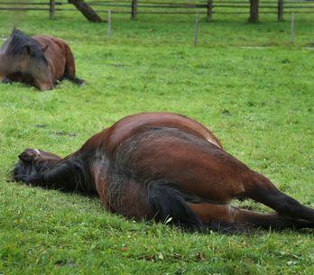 Pourquoi voit-on de nombreuses affaires de chevaux mutilés ?
