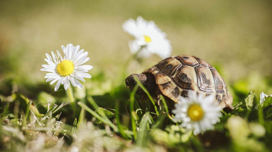Sognare tartarughe: significato e interpretazioni