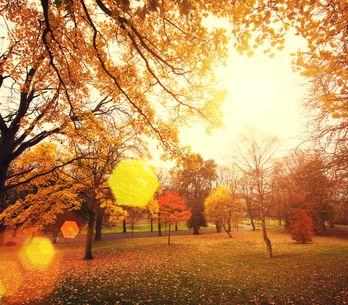 15 poesie sull'autunno per celebrare la stagione del foliage