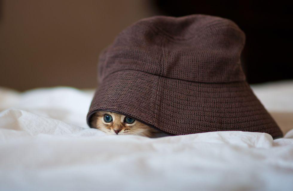 Warntag 2020: So bereitet ihr eure Haustiere auf die Sirenen vor