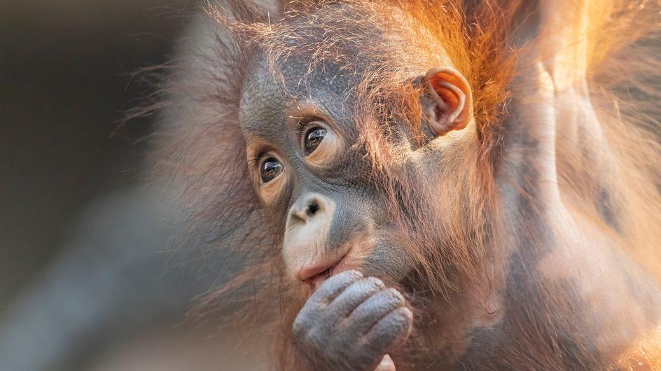 L'humanité est responsable du déclin de 68% de la population animale !